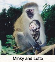 MINKY & LOTTO